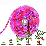 Tiras de luz de la Planta de 12V LED, la Planta de Cultivo de Espectro Completo Impermeable de 5M, SMD 5050 Rojo Azul 4: 1, para Plantas de Interior Acuario de Invernadero