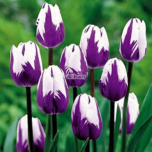 Soteer Garten-10/20 stück Tulpenzwiebeln Samen Bunte Blumensamen Blumenzwiebel Bonsai Tulpen Winterhart Mehrjährig (10 stück, 18)