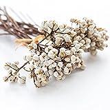 SJMLP Ramo de Flores Blancas secas Naturales para la decoración del hogar del Banquete de Boda Regalo del día de San Valentín del día de Navidad, Color Blanco 50g