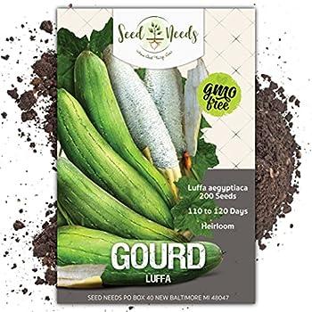 Seed Needs Luffa Gourd  Luffa aegyptiaca  Bulk Package of 200 Seeds