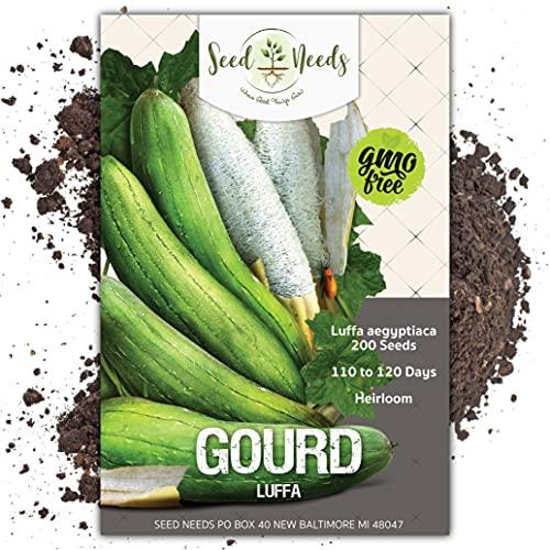Seed Needs, Luffa Gourd (Luffa aegyptiaca) Bulk Package of 200 Seeds