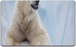 YOLIYANA Zoo Stylish Doormat,Portrait of Large White Polar Bear on Ice Claws Antarctica North Outdoors Decorative for Door,23