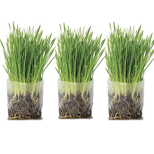 Window Garden Pop Up Cat Grass Kit