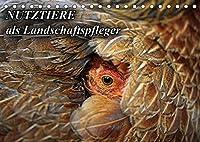Nutztiere als Landschaftspfleger (Tischkalender 2022 DIN A5 quer): Nutztiere wie Schafe, Ziegen, Pferde und Esel verschwinden zunehmend aus unserer Landschaft (Monatskalender, 14 Seiten )