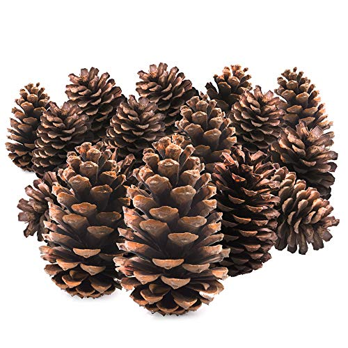 TRIXES 15PC Pine Cones - Tree Decorations - Christmas Wreath Garland Making Supplies - Pot Pourri - 12cm Size - Pinecone Craft Accessories -Colour Natural Brown