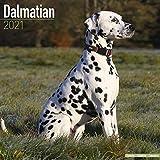 Dalmatians - Dalmatiner 2021 - 16-Monatskalender mit freier DogDays-App: Original BrownTrout-Kalender [Mehrsprachig] [Kalender] (Wall-Kalender)