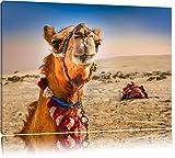 Lustiges Kamel in Wüste Format: 60x40 auf Leinwand, XXL