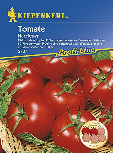 Kiepenkerl Tomaten Harzfeuer, F1