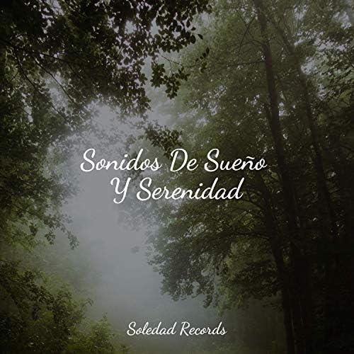 Sonidos De Lluvia y Tormentas, Musicas Crianças & Música para Dormir Con Relajantes Sonidos de la Naturaleza