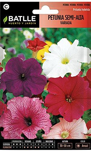 Petunia semi alta variada Anual, altura 30-50 cm Empleo: en macizos, borduras, macetas y jardineras