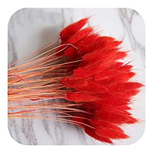 MEIshop 100pcs Dried Natural Flower Bouquets White ColorLagurus Ovatus Bouquets&Uraria Picta&Rabbit Tail Grass Bunches-100pcs red Color-