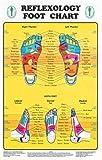 Reflexology Foot Chart - Reflexology Zones Marked. 1 Laminated Chart 8' x 11'
