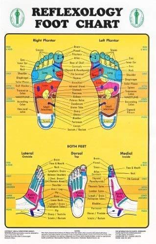 Reflexology Foot Chart - Reflexology Zones Marked. 1 Laminated Chart 8
