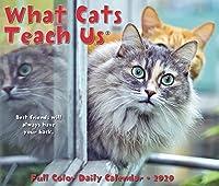 What Cats Teach Us 2020 Calendar