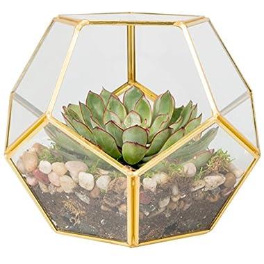 Glass Terrarium, Succulent & Air Plant (Sphere)