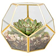Deco Gold-Trimmed Glass Geometric DIY Terrarium, Succulent & Air Plant- Sphere Shaped for Indoor Gardening Decor- Create your own Flower, Fern, Moss Centerpiece- Amazing Holiday and Wedding Gift