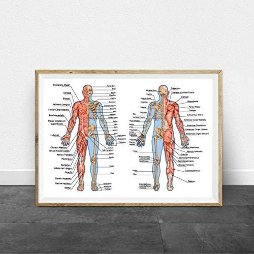 GUDOJK wandschilderij didactische plank van de menselijke enkels spieren drukt medische pedagogisch affiche menselijke anatomie skelet kunst medisch schilderij 70x100cm(28x40inch)