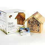 Maison pour abeilles et graines de fleurs...