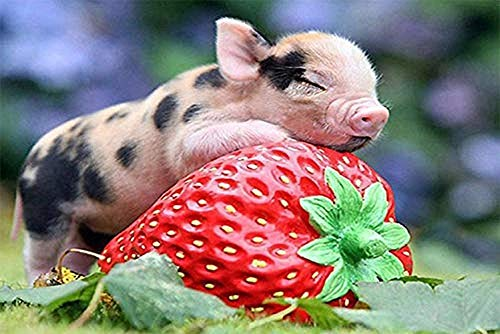 DIY 5D Diamant Malerei Schweine Essen Erdbeere süßes Schwein Schwein nach Anzahl Kits, Malerei Vollbohrkristall Bilder Kunsthandwerk für Home Wall Decor Geschenk