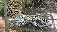 Get personal with Costa Rican creatures. Learn the ins and outs of an animal rescue center. Visit monkeys, toucans, jaguars, cougars, and more.