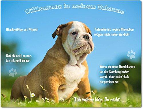 Merchandise for Fans Blechschild/Warnschild/Türschild - Aluminium - 15x20cm - - Willkommen in Meinem Zuhause - Motiv: Englische Bulldogge - 01