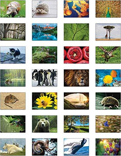 Landschaften Postkarten : Die Natur ist unglaublich - 28 Postkarten, die die Schönheit und Komplexität der natürlichen Welt zeigen.