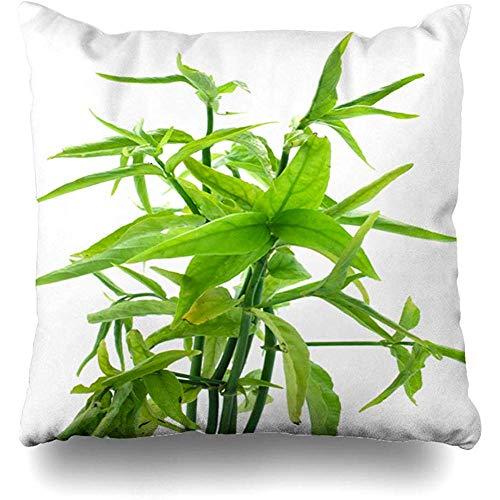 SSHELEY kussensloop Lindau Green Clinacanthus Nutans laat Thaise kruid behandelen voedsel drinken antioxidant rode beet kussensloop