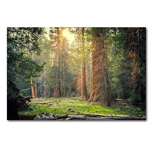 Lomoko Forest Greenery Nature Sunlight Tree Paisaje Posters e Impresiones Cuadro de Arte de Pared Pintura en Lienzo para decoración de Sala de Estar Impresión en Lienzo 50x70cm sin Marco
