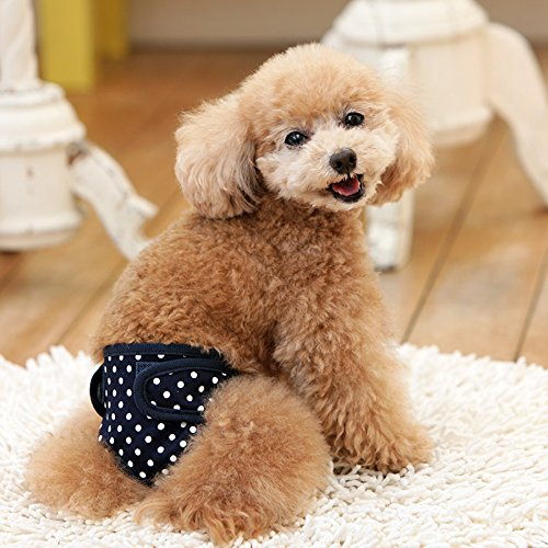 犬と生活『サニタリーパンツ ドット』