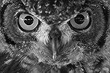Bilderdepot24 Fototapete selbstklebend Eule Portrait II - schwarz weiß 100x65 cm