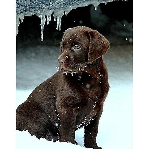 Rompecabezas de 5000 piezas para adultos - Rompecabezas de perro negro en la nieve con póster - Rompecabezas para adultos de 5000 o rompecabezas...