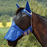 Champion Ear Protections Review and Comparison