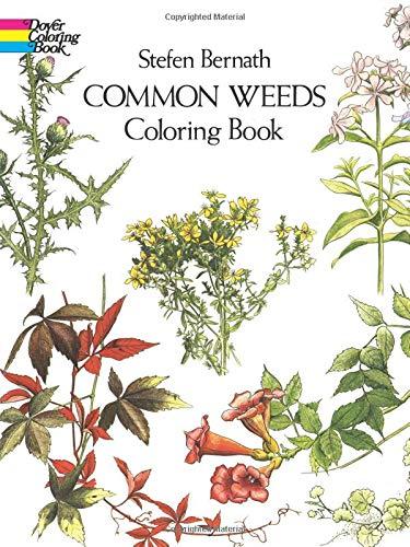 Best common yard weeds
