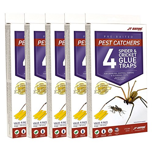 J T Eaton 076706844002 Spider and Cricket Glue...