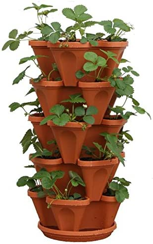 In 4 Pots B GRADE Potted Plants 5 Variety Pack