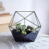 Asvert Cristal Transparente Pentagon Dodecaedro Geométrico Terrario...