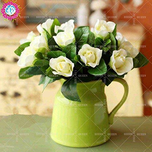 2 pièces / sac graines de fleurs de Gardenia (Cape Jasmine) jardin en pot Bonsai odeur incroyable et de belles fleurs pour chambre bateau libre 4