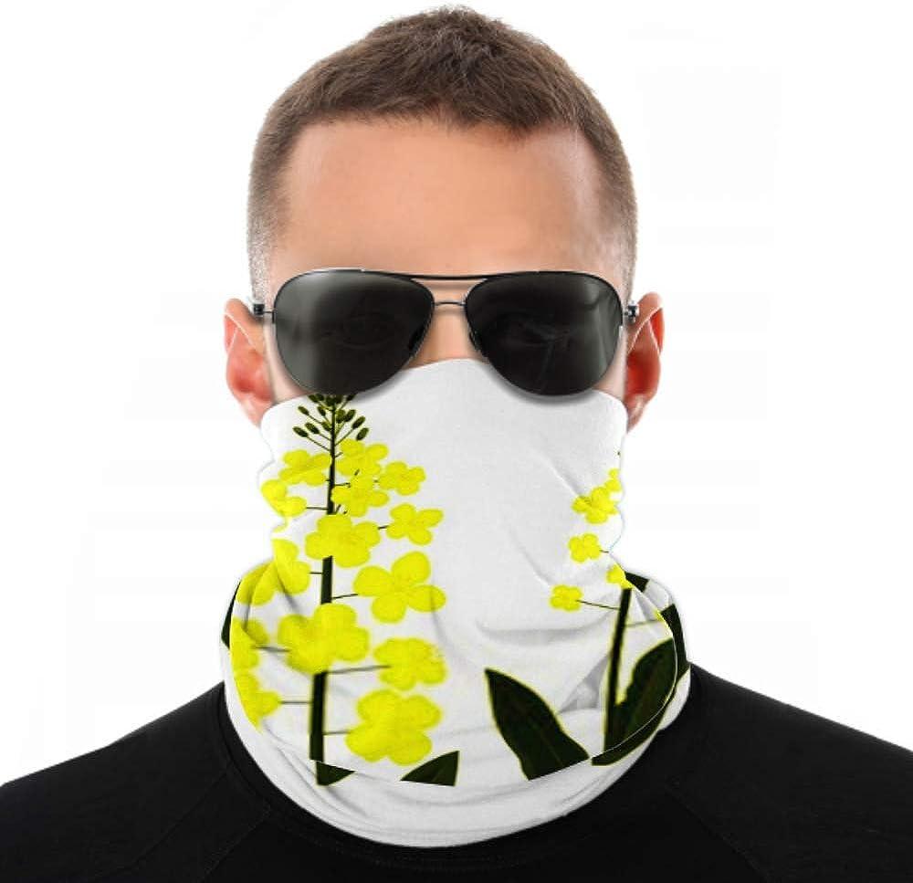 Headbands For Men Women Neck Gaiter, Face Mask, Headband, Scarf Canola Flower Rape Plant Seed Vector Turban Multi Scarf Double Sided Print Head Wrap For Sport Outdoor
