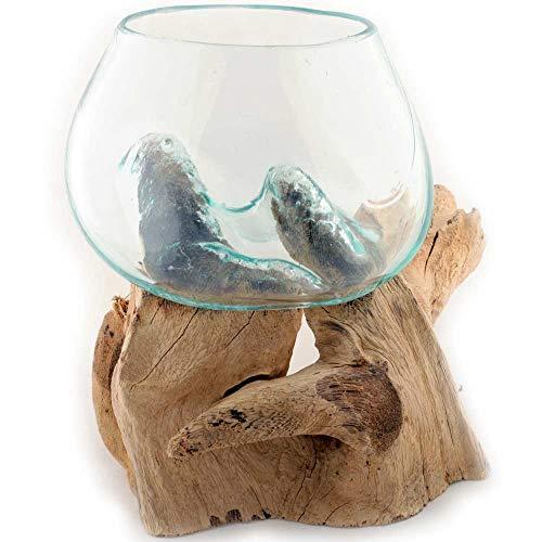 Gedeko Wurzel mit Glasvase Rund Ø ca.11-12 cm Glas Kugelvase Vase auf Holz Wurzelholz