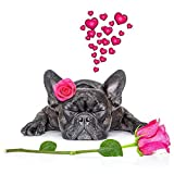 DIY 5D Full Drill French Bulldog Dog Square Diamond Painting by Number Kits for Adults and Children Crystal Rhinestone Cross Stitch Pet Pictures for Wall Decoration Gift (DG18, 16x16IN/40x40cm)