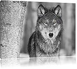 wunderschöner wachsamer Wolf schwarz/weiß Format: 100x70