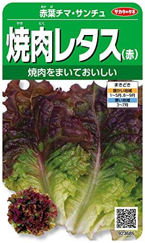 サカタのタネ 実咲野菜3685 赤葉チマ・サンチュ 焼肉レタス(赤) 10袋セット