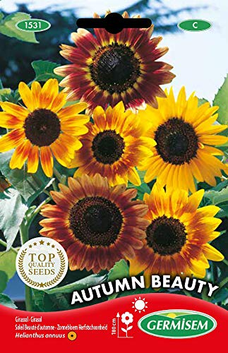 Germisem Autumn Beauty Graines de Tournesol 3 g EC1531 Multicolore