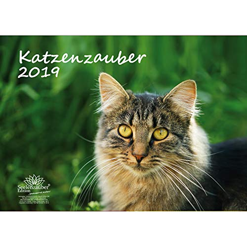 Katzenzauber · DIN A3 · Premium Kalender 2019 · Katzen · Haustier · Stubentiger · Katzenbaby · Tier · Edition Seelenzauber