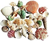 Acuario Decoración Adornos de acuario Concha Natural Conch Conch Fish Tanque Adorno Conjunto Artesanía Fish Tank Ornament Accesorios de Accesorios Accesorios Para Adornos Para Tanque De Peces Props 80