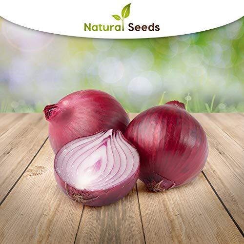 rote Zwiebel 100 x Samen - alte Sorte Ernte 2019 hohe Keimrate 100% Natursamen
