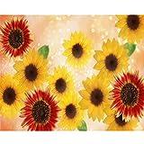 5D DIY Diamond Summer Sunflower Painting Kit Set Taladro Redondo Completo Bordado de Diamantes Mosaico Punto de Cruz Decoración del hogar (cuadrado30x40cm)