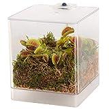 Swampworld Mini-Terrarium inkl. fleischfressende Pflanze - Pflanzset mit Moos, Venusfliegenfalle & LED-Beleuchtung - Ideal als Deko, Fliegenfalle & Geschenk für Kinder & Erwachsene - 12 x 12 x 15 cm