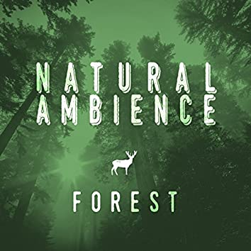 Natural Ambience - Forest