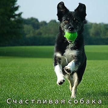Счастливая собака - Расслабляющая инструментальная музыка, классическое пианино, глубокий сон, облегчение тревоги, покой и гармония, музыкальная терапия